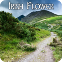 Irish Flower
